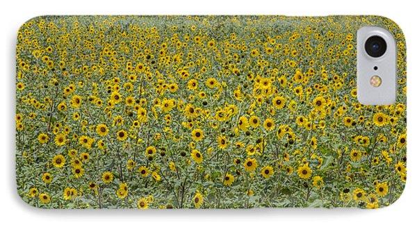 Huge Wild Sunflower Colony IPhone Case