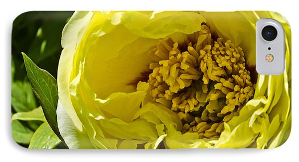 Huge Yellow Flower IPhone Case