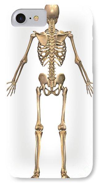 Human Skeletal System, Back View Phone Case by Stocktrek Images