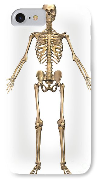 Human Skeletal System, Front View Phone Case by Stocktrek Images