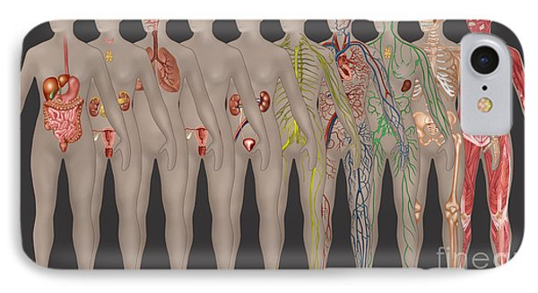 Human Systems In The Female Anatomy Phone Case by Gwen Shockey