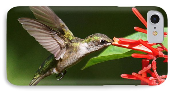 Hummer At The Firebush IPhone Case by Myrna Bradshaw
