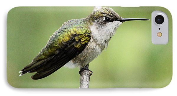 Hummingbird 3 IPhone Case by Bonfire Photography