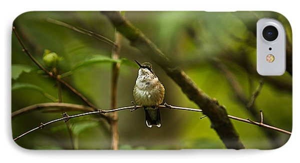 IPhone Case featuring the photograph Hummingbird 3 by Tammy Schneider