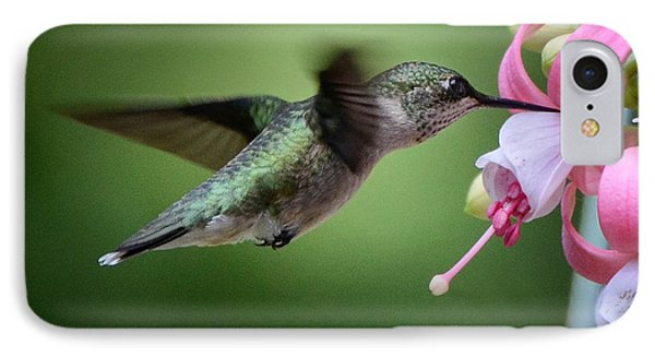 Hummingbird Carbs IPhone Case by Amy Porter