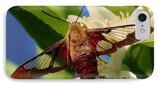 Hummingbird Clearwing Moth IPhone Case by Myrna Bradshaw