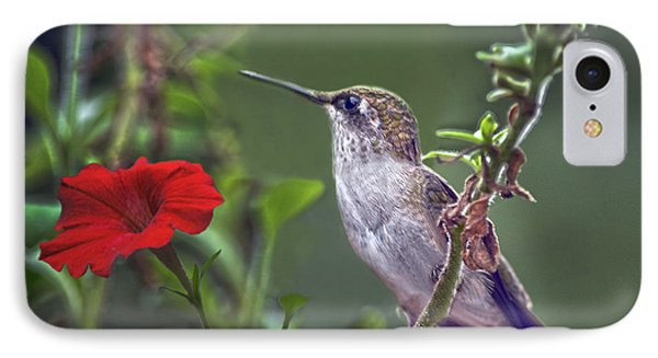 Hummingbird Delight Phone Case by Sandi OReilly