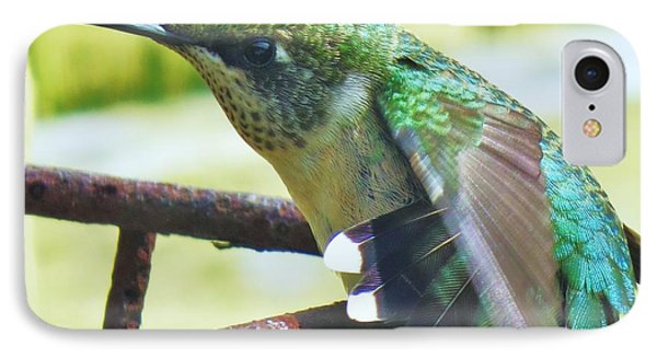 Hummingbird Details 6 IPhone Case by Judy Via-Wolff