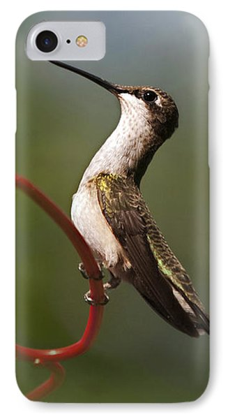 Hummingbird Eloquent Appeal Phone Case by Christina Rollo