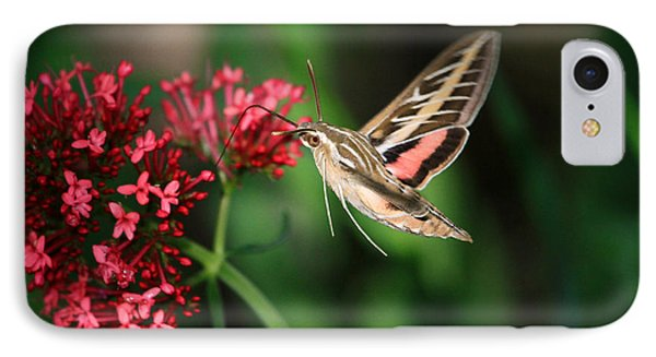 Hummingbird Moth Phone Case by Donna Kennedy