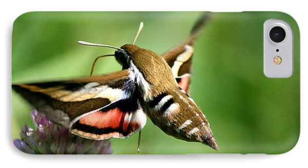 Hummingbird Moth From Behind IPhone Case by Neal Eslinger
