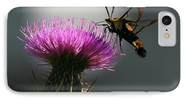 Hummingbird Moth II Phone Case by Douglas Stucky