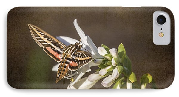 Hummingbird Moth IPhone Case by Jeff Swanson