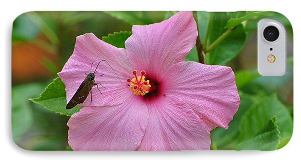 IPhone Case featuring the photograph Hummingbird Moth On Pink Hybiscus by Jodi Terracina