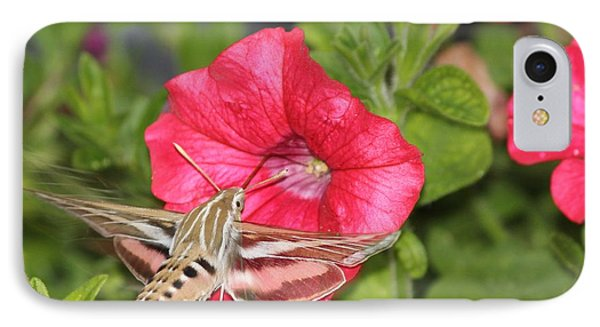 Hummingbird Moth IPhone Case