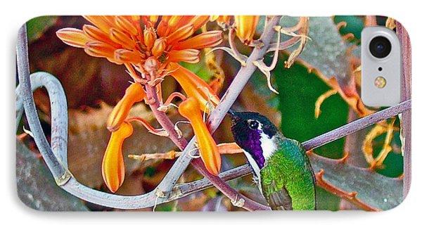 Hummingbird On Aloe In Living Desert In Palm Desert-california IPhone Case