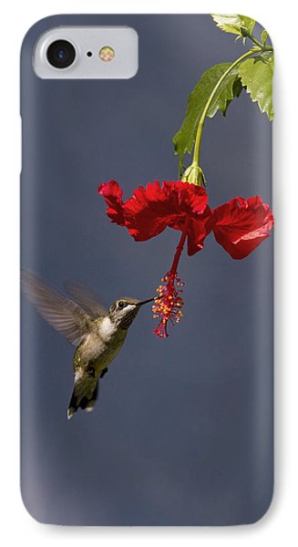 Hummingbird On Hibiscus IPhone Case by Robert Camp