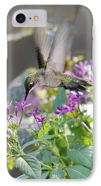 Hummingbird On Penta IPhone Case by Robert Camp