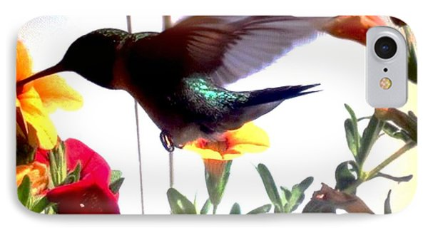 Hummingbird IPhone Case by Renee Michelle Wenker