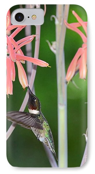 Hummingbird Ruby Throated Sips In Air From Aloe Blooms IPhone Case by Wayne Nielsen