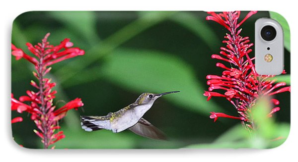 Hummingbird With Flower Red Suspension IPhone Case by Wayne Nielsen