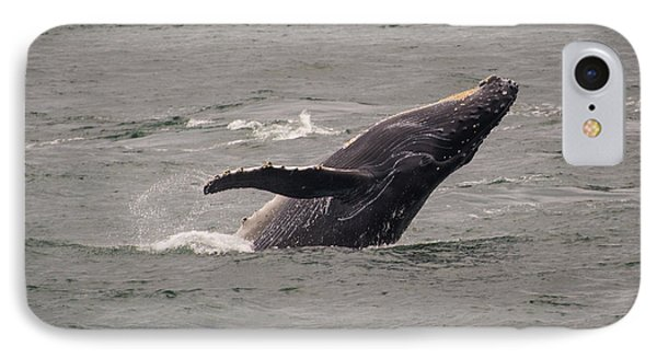 IPhone Case featuring the photograph Humpback Whale Breaching by Janis Knight