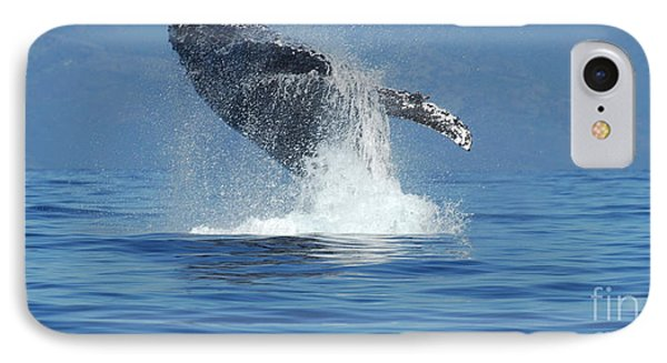 Humpback Whale Breaching Phone Case by Bob Christopher