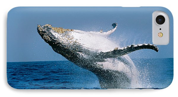 Humpback Whale Megaptera Novaeangliae IPhone Case by Panoramic Images