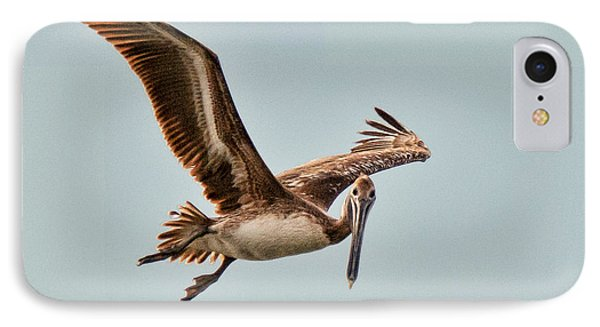 IPhone Case featuring the photograph Hunting Bait Fish by Don Durfee