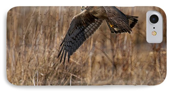 Hunting Harrier IPhone Case