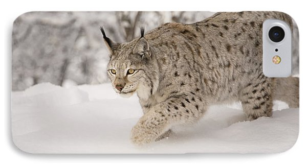 Hunting Lynx IPhone Case
