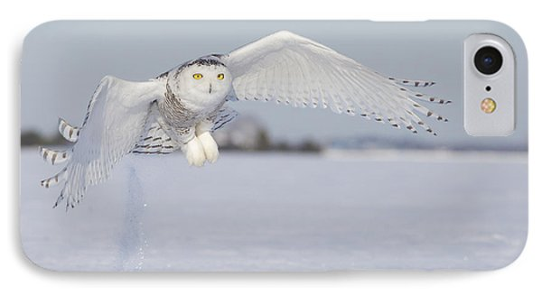 Hunting Snowy Owl IPhone Case