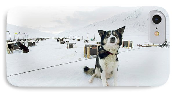 Husky Dogs And Kennels IPhone Case