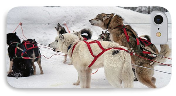 Husky Dogs Pull A Sledge  IPhone Case