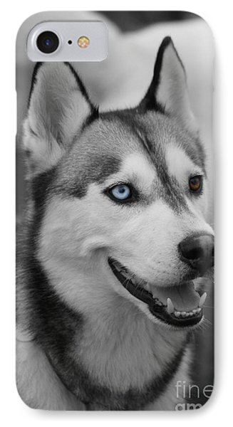 Husky Portrait IPhone Case by Vicki Spindler
