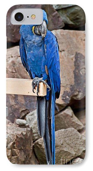 Hyacinth Macaw Parrot Bird Art Prints IPhone Case