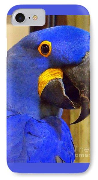 Hyacinth Macaw Portrait IPhone Case by Lingfai Leung