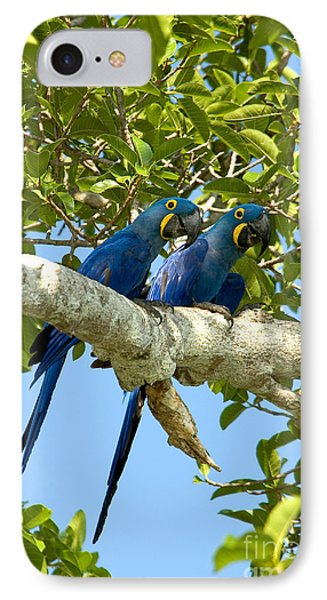 Hyacinth Macaws Brazil IPhone Case by Gregory G Dimijian MD