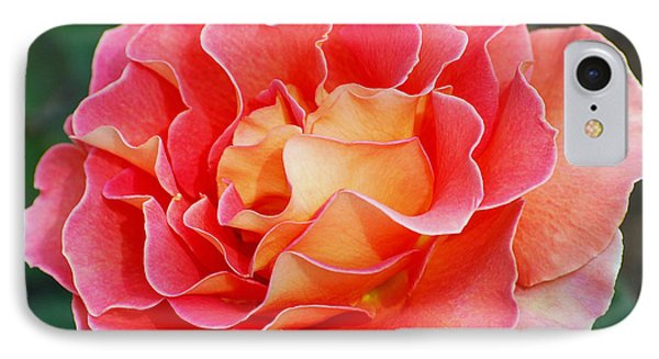Hybrid Tea Rose  Phone Case by Lisa Phillips