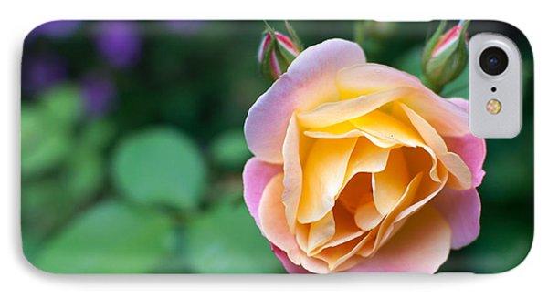 IPhone Case featuring the photograph Hybrid Tea Rose by Matt Malloy