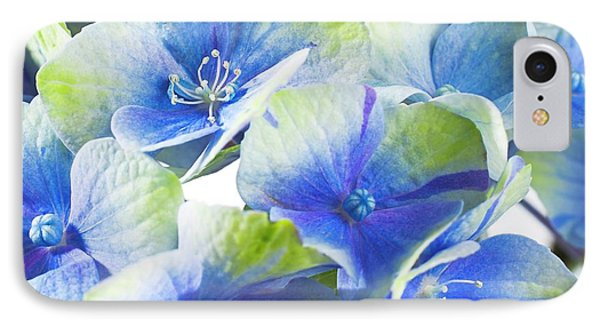 Hydrangea Flower And Soil Acidity IPhone Case by Science Photo Library