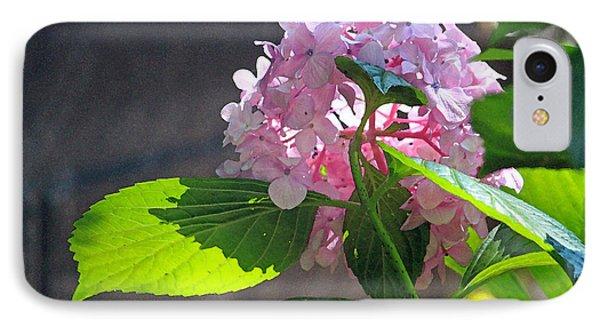 Hydrangea Heaven IPhone Case by Suzanne Gaff