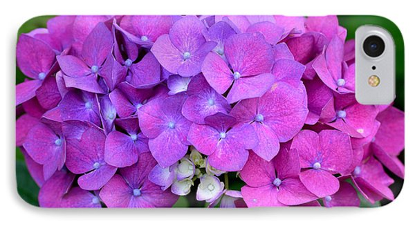 IPhone Case featuring the photograph Hydrangea  by Kathy King