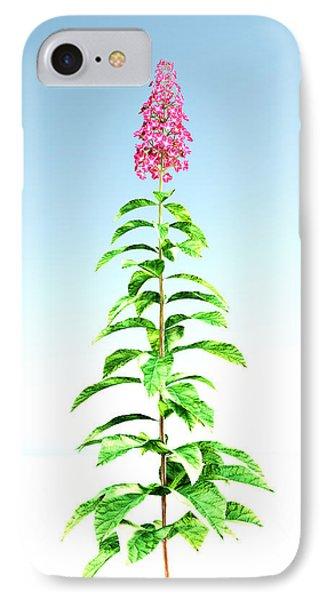 Hydrangea Paniculata... IPhone Case