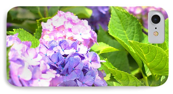 IPhone Case featuring the photograph Hydrangeas In The Sun by Rachel Mirror