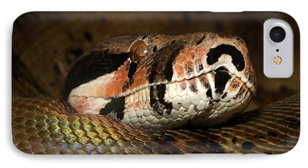 Boa Constrictor iPhone 7 Case - Hypo Colombian Boa by Nigel Downer