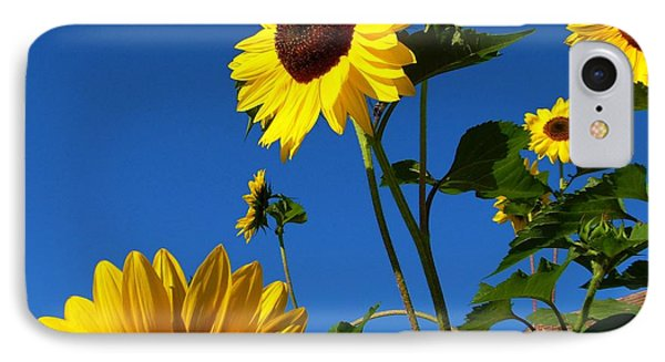 I Girasoli Dietro Casa Mia - Sunflowers In The Field Behind My House. IPhone Case