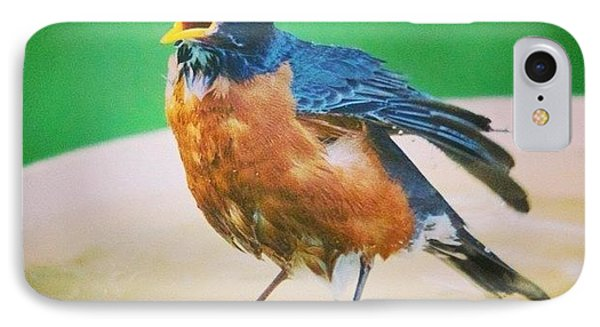 Bathing Robin IPhone Case by Heidi Hermes
