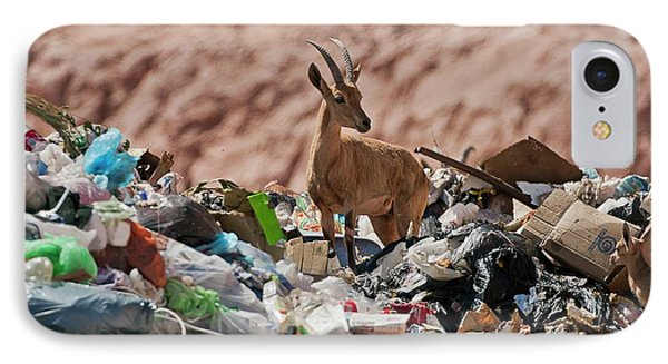 Ibex In City Dump IPhone Case by Photostock-israel
