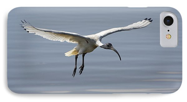 Ibis In Flight IPhone Case by Craig Dingle